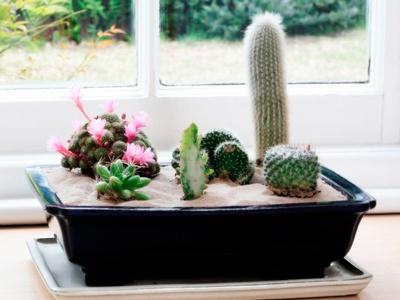 mini jardin cactus, ideas para jardin pequeño, arreglo de jardines pequeños