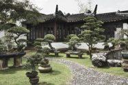 jardin rustico con bonsais