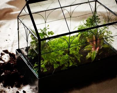 mini jardin terrario, plantas para macetas pequeñas, diseñar jardin pequeño
