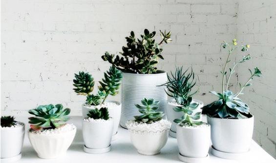 Plantas de interior para decorar oficinas.
